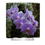 Orchids Square Format Img 5437 Shower Curtain