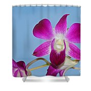 Orchids With Blue Sky Shower Curtain