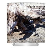 Oregon Beach - Driftwood Trunk Shower Curtain