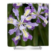 Oregon Irises In Bloom Closeup Shower Curtain