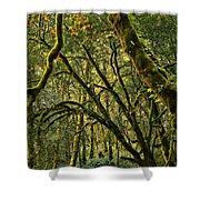 Oregon Rainforest Green Shower Curtain