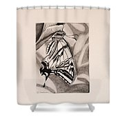 Oregon Swallowtail Butterfly  Shower Curtain