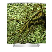 Oregon Tree Shower Curtain