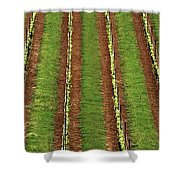 Oregon Vineyard Rows Panoramic Shower Curtain