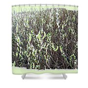 Oregon Willow Catkins Shower Curtain