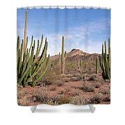 Organ Pipe Cactus Natl Monument Shower Curtain