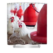 Organic Chicken Coop  Shower Curtain