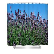 Organic Lavender Shower Curtain