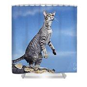 Oriental Cat Shower Curtain