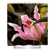Oriental Lily Beauty Shower Curtain