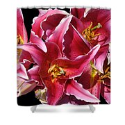 Oriental Lily Shower Curtain