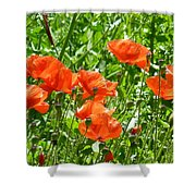 Oriental Poppies Shower Curtain