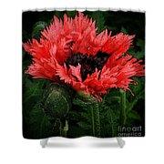 Oriental Poppy Shower Curtain