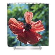 Oriental Poppy Shower Curtain
