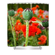 Oriental Poppy Seed Pod Shower Curtain
