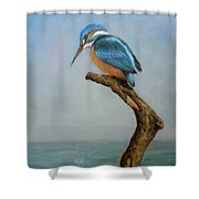 Original Animal Oil Painting Bird  Art Kingfisher On Canvas#16-2-6-15 Shower Curtain