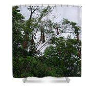 Oriole High Up In The Jungle Canopy Shower Curtain