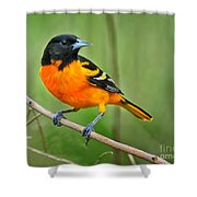 Oriole Perched Shower Curtain