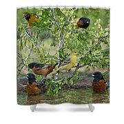 Orioles At The Pool Shower Curtain