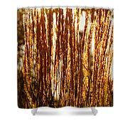 Ornamental Golden Grass Shower Curtain