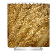 Ornamental Grass Shower Curtain