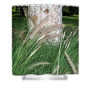 Ornamental Grass Shower Curtain