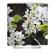 Ornamental Pear Blossoms No. 1 Shower Curtain
