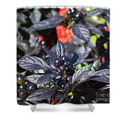 Ornamental Peppers Shower Curtain