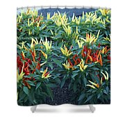 Ornamental Peppers...   # Shower Curtain