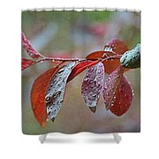 Ornamental Plum Tree Leaves With Raindrops Shower Curtain