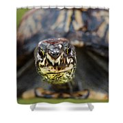 Box Turtle Close-up Shower Curtain
