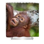 Orphan Baby Orangutan Shower Curtain