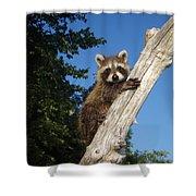 Orphaned Raccoon Shower Curtain