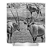 Oryx Black And White Shower Curtain