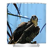 Osprey 1 Shower Curtain
