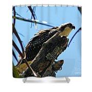 Osprey 2 Shower Curtain