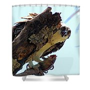 Osprey 3 Shower Curtain