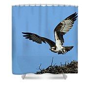 Osprey 9 Shower Curtain
