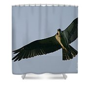 Osprey Above The Androscoggin Shower Curtain