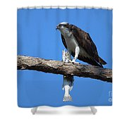 Osprey And Fish No.4  Shower Curtain