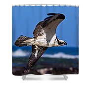 Osprey Bringing Home The Bacon Shower Curtain