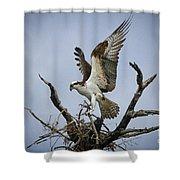 Osprey Building A New Nest Shower Curtain