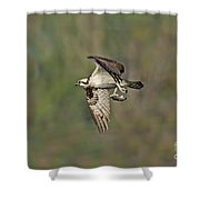 Osprey Carrying Small Fish Shower Curtain
