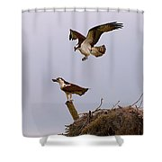 Osprey Coming In Shower Curtain