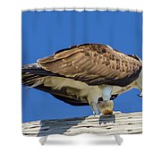 Osprey Eating Lunch Shower Curtain