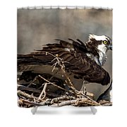 Osprey Family Huddle Shower Curtain