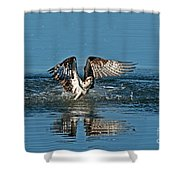Osprey Getting Out Of The Water Shower Curtain