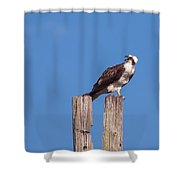 Osprey Giving Warning Shower Curtain