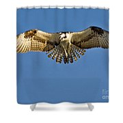 Osprey Hovering Shower Curtain