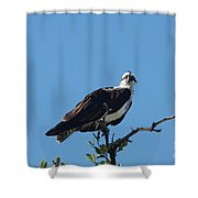 Osprey In A Tree Shower Curtain